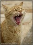 nimmersatte Katze