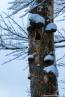 202101_winter_15